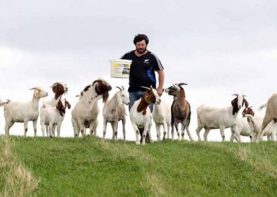 Conwy Goat Products